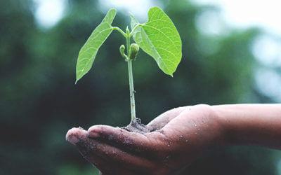 Nuevas ayudas para jóvenes agricultores y modernización agraria